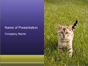 Cute Cat on the Grass PowerPoint Templates