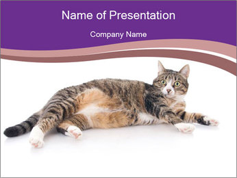 Cute Pussycat PowerPoint Template