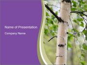 Trunk of Birch Tree PowerPoint Templates