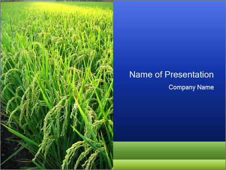 Rice field in india powerpoint template backgrounds google slides rice field in india powerpoint template toneelgroepblik Image collections