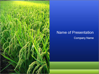 Rice Field in India PowerPoint Template