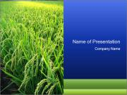 Rice Field in India PowerPoint Templates