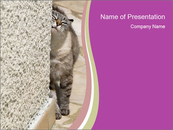 Grey Cat Scratching Against the Corner PowerPoint Template