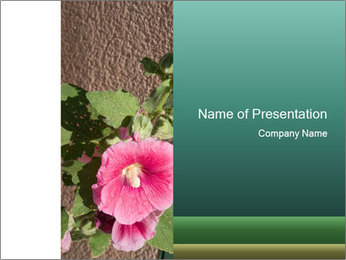 Blooming Pink Rose PowerPoint Template