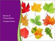 Dried Colorful Leaves PowerPoint Templates