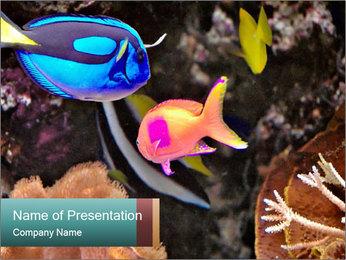 Exotic Fish in Aquarium PowerPoint Template
