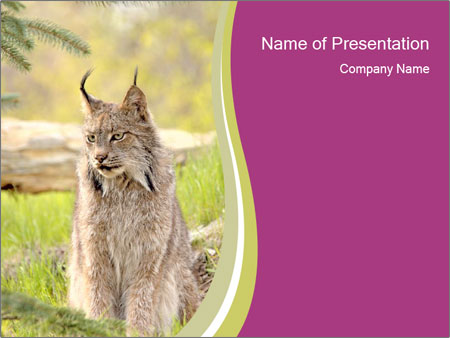 Lynx in canadian zoo powerpoint template backgrounds id 0000013677 lynx in canadian zoo powerpoint template toneelgroepblik