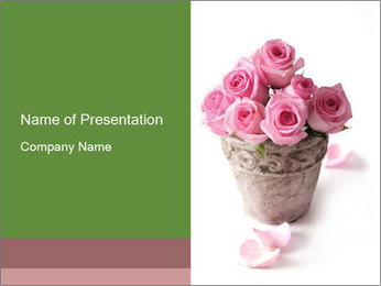 Romantic Pink Roses in Pot PowerPoint Template