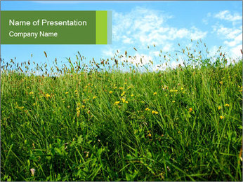 Green Field with Wild Yellow Flowers PowerPoint Template