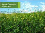 Green Field with Wild Yellow Flowers PowerPoint Templates