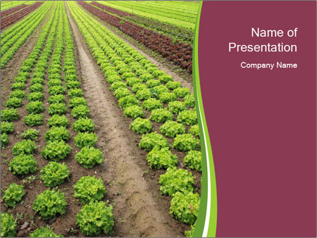 Lettuce Farm Powerpoint Template Backgrounds Google Slides Id