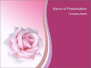 Wedding Pink Rose PowerPoint Template