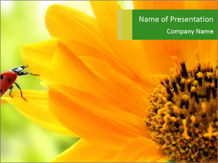 Yellow Flower And Bee Powerpoint Template Backgrounds Google