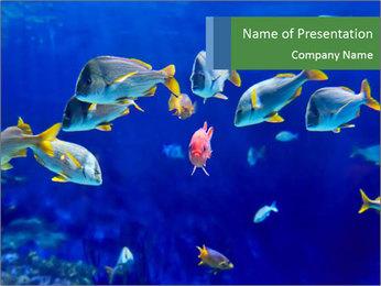 Marine Fish PowerPoint Template