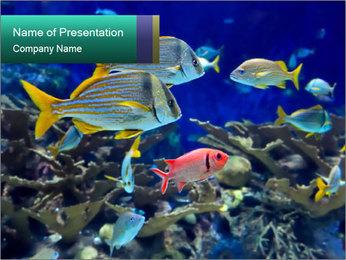 Marine World PowerPoint Template