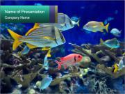 Marine World PowerPoint Templates