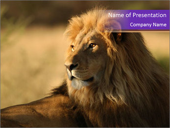 Pride Lion in Safari PowerPoint Template