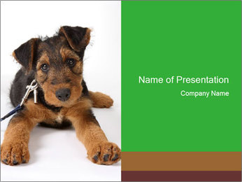 Cute Terrier Puppy PowerPoint Template
