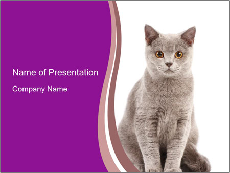 grey home cat powerpoint template
