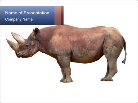 rhinoceros powerpoint template smiletemplates com