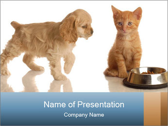 Cocker Spaniel Puppy Eating with Red Tabby Kitten PowerPoint Template