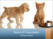 Cocker Spaniel Puppy Eating with Red Tabby Kitten PowerPoint Templates