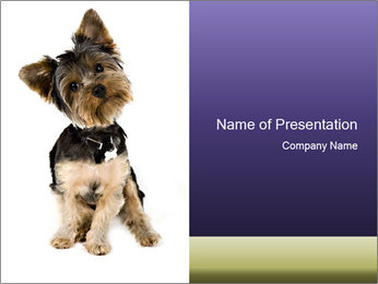 Cute Yorkshire Puppy PowerPoint Template