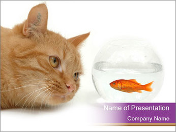 Red Cat Looking at Fish PowerPoint Template