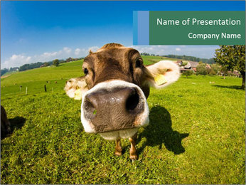 Cute Cow's Nose PowerPoint Template
