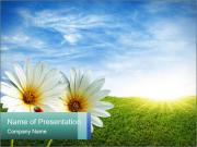 White Daisies and Tiny Lady-Bug PowerPoint Templates