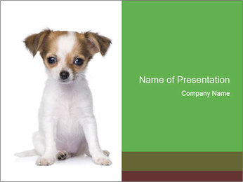 Cute Chihuahua Puppy PowerPoint Template