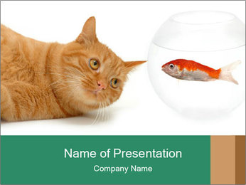 Cat Dreaming about Fish PowerPoint Template