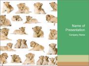 Cute Lion Cubs PowerPoint Templates
