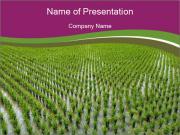 Rice Paddies in Chine Modèles des présentations  PowerPoint
