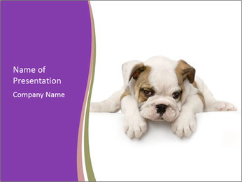 Sad Bulldog Puppy PowerPoint Template
