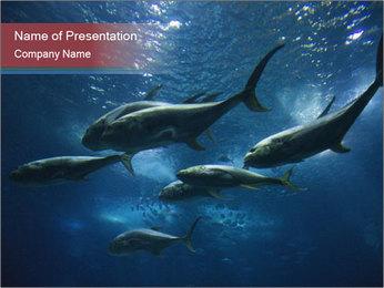 Fish in Aquarium PowerPoint Template