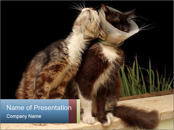 Healthy and Sick Kat in Protective Collar PowerPoint Template