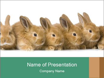 Line of Cute Bunnies PowerPoint Template