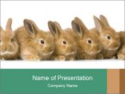 Line of Cute Bunnies PowerPoint Templates