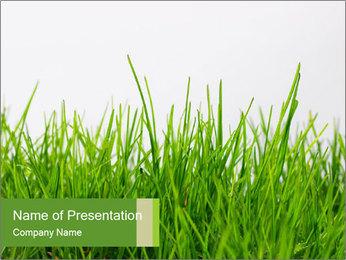 Spring Grass PowerPoint Template