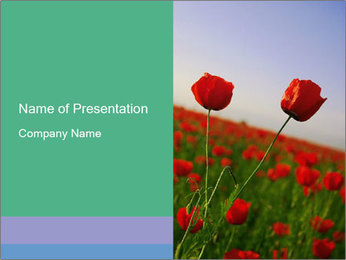 Red Poppies in the Field PowerPoint Template