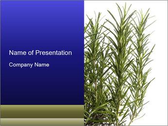 Organic Rrosemary PowerPoint Template