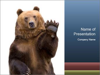 Ours russe ondulant une patte Modèles des présentations  PowerPoint