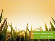 Rencontrez Lever de soleil au champ de riz Modèles des présentations  PowerPoint