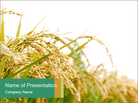Rice farm powerpoint template backgrounds id 0000016763 rice farm powerpoint templates toneelgroepblik Gallery