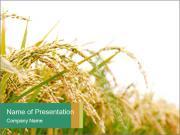 Rýže farma PowerPoint šablony