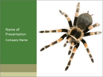 Spider in Wild Nature PowerPoint Template