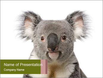 Cute Koala Bear PowerPoint Template