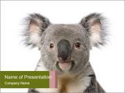 Cute Koala Bear PowerPoint Templates
