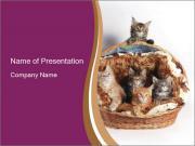 Cute Kittens in Basket PowerPoint Templates